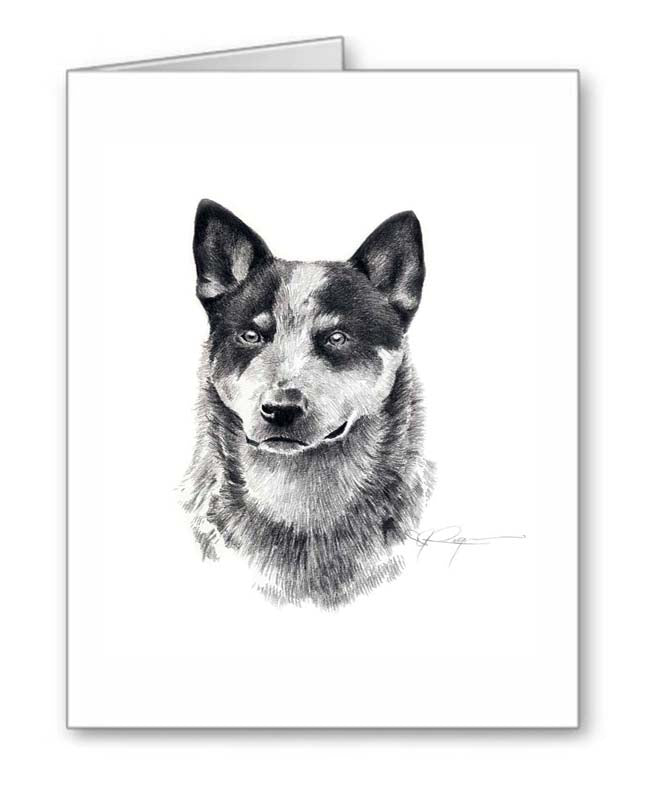 A Australian Cattle Dog portrait print based on a David J Rogers original watercolor