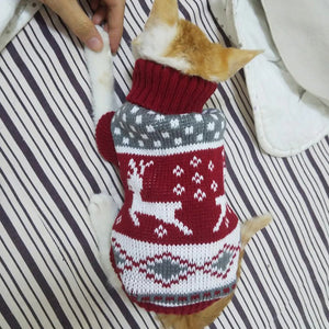 Fun and Festive Christmas Sweater For Cats