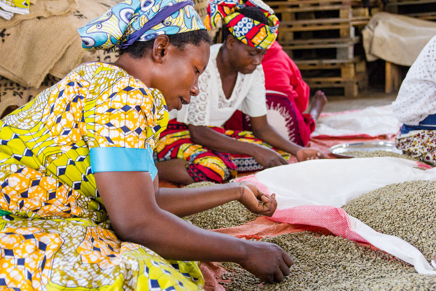 Barriques Congo Idjwi Coffee Heads To The UN