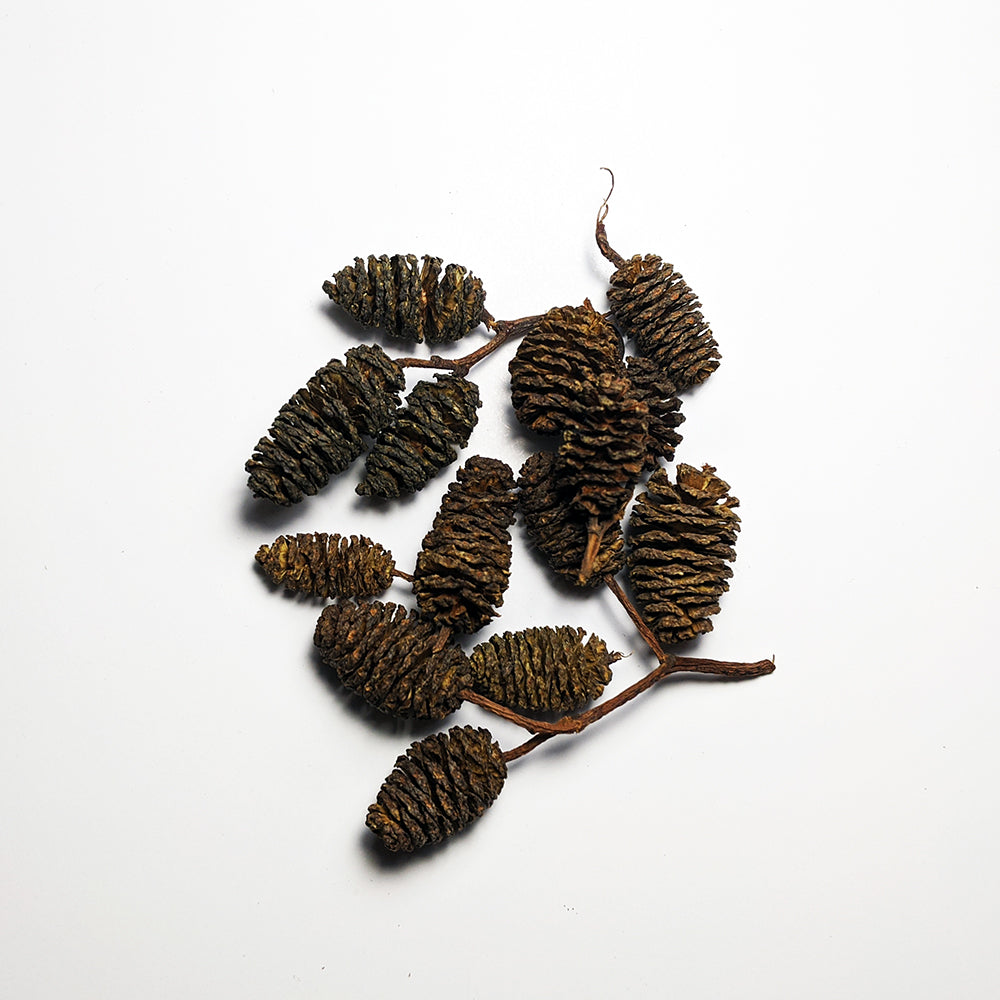 Alder Cones Aquarium Wood