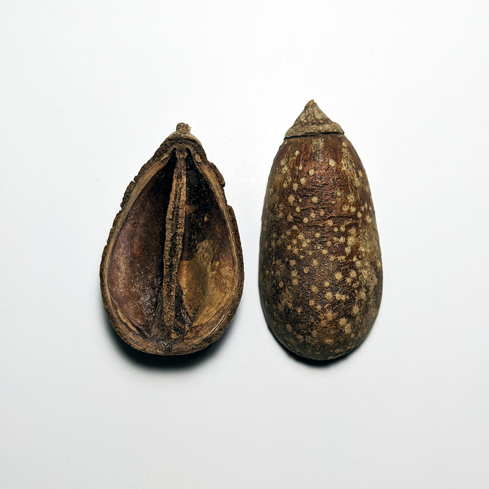"Mokha ""Pear"" Pod Halves Aquarium Botanicals"