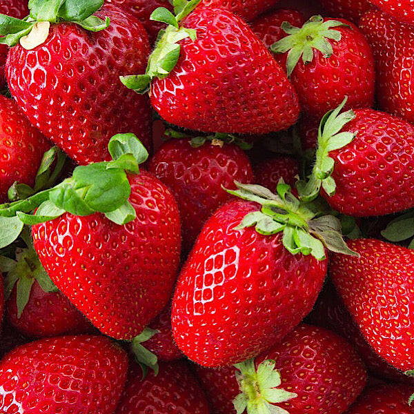 East or West, Strawberries  are the best! Here's why.