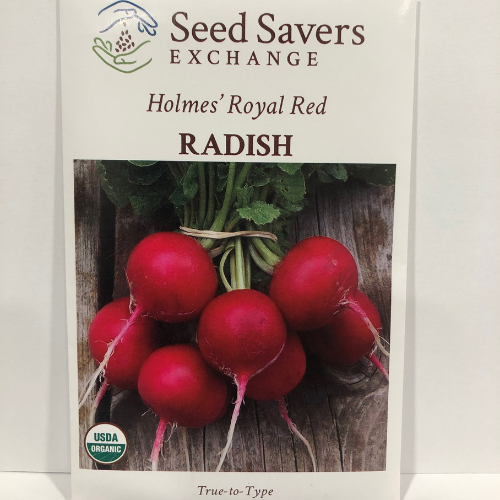Organic Holmes Royal Red Radish, 1899 Heirloom