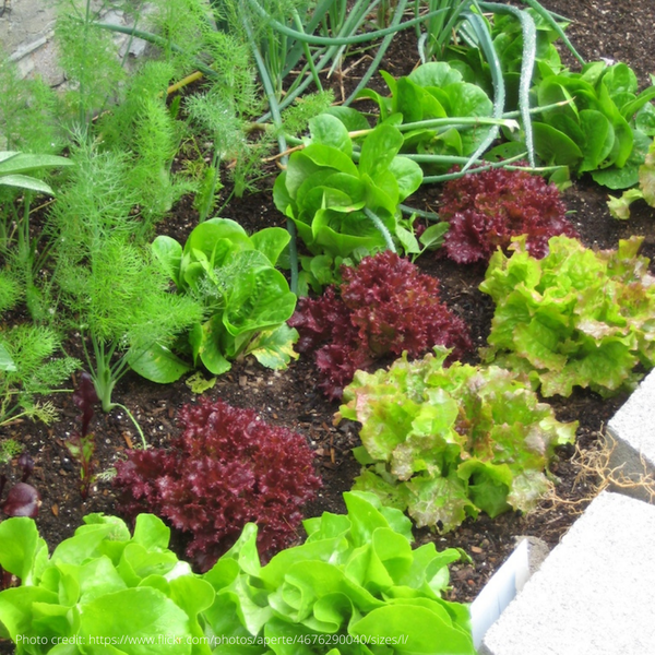 Organic Micro Garden Collection