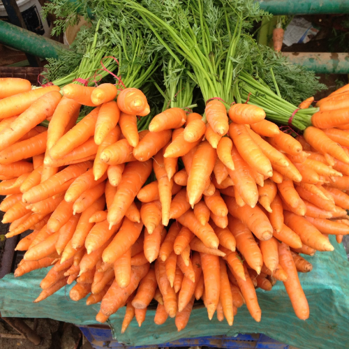 Organic Scarlet Nantes Carrot, 1850's heirloom