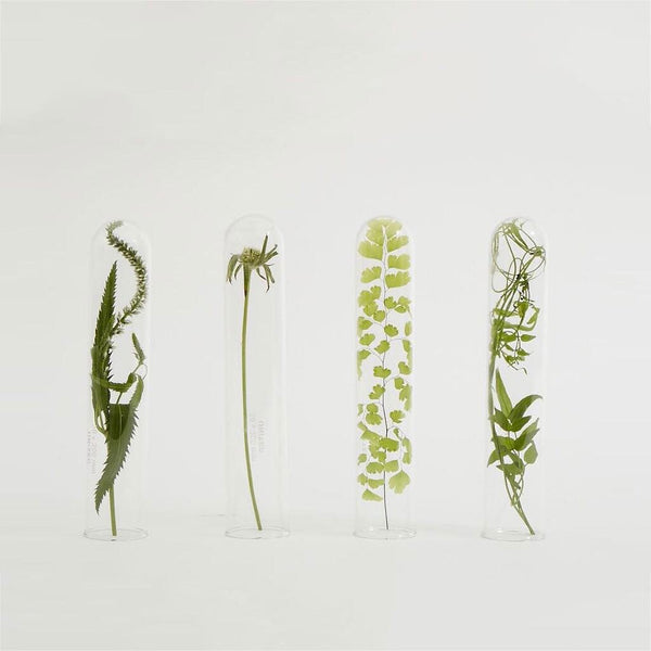 Four plant specimens in glass tubes