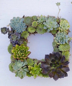 """SUCCULENT WREATH"" KIT  -"" Make it at Home"" KIT - PRE-ORDER AVAILABLE"