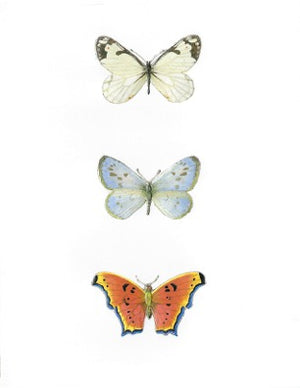 Butterflies - Embossed on White Card - Edgecomb Potters
