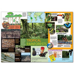 Tropical Rainforest Classroom Poster:Primary Classroom Resources