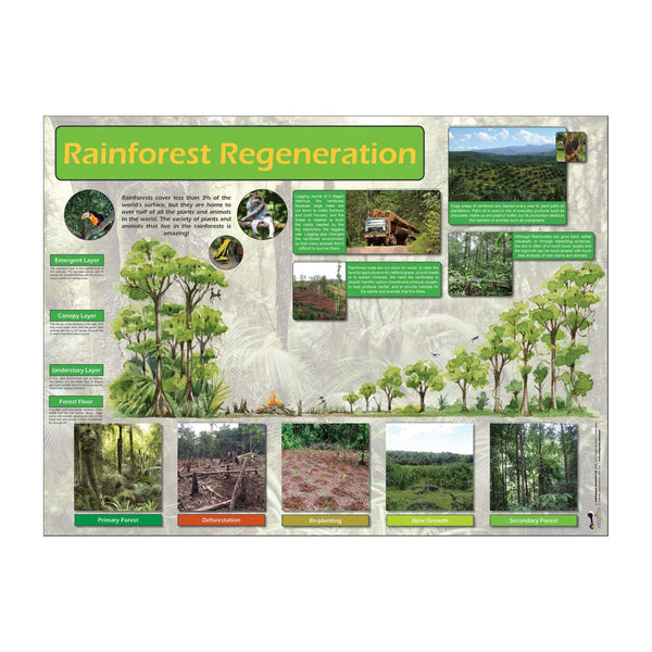 Rainforest Regeneration Classroom Display Poster:Primary Classroom Resources