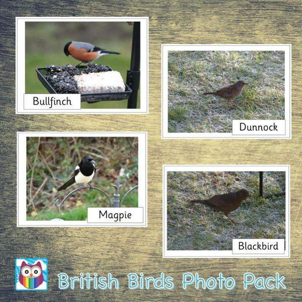 British Birds Photo Pack:Primary Classroom Resources,Digital download