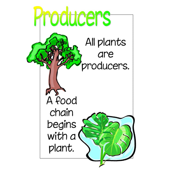 Food Chains Display Pack:Primary Classroom Resources