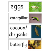 Life Cycle of a Butterfly Display Pack