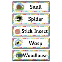 Minibeasts Flashcards:Primary Classroom Resources