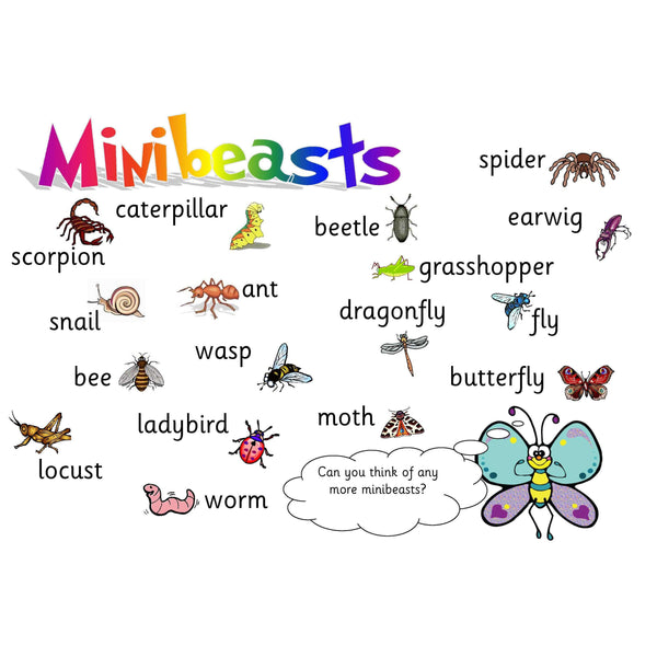 Minibeasts Vocabulary Mat:Primary Classroom Resources