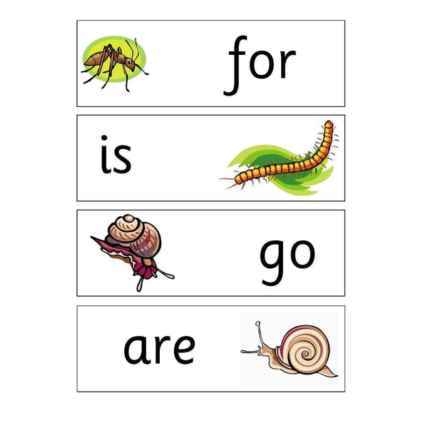 Minibeasts Year 4 Keywords:Primary Classroom Resources