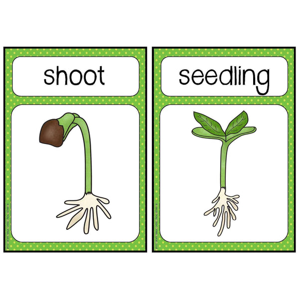 Plant Life Cycle Stages Cards