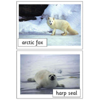 Polar Animals Photo Pack