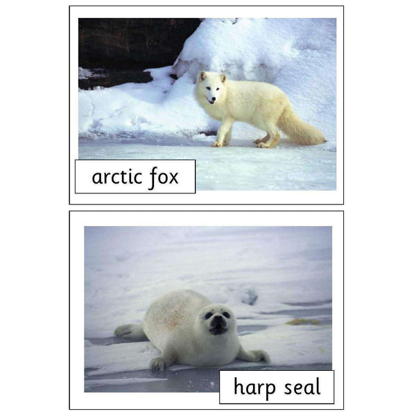 Polar Animals Photo Pack:Primary Classroom Resources