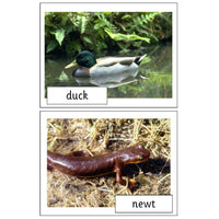 Pond Life Photo Pack:Primary Classroom Resources