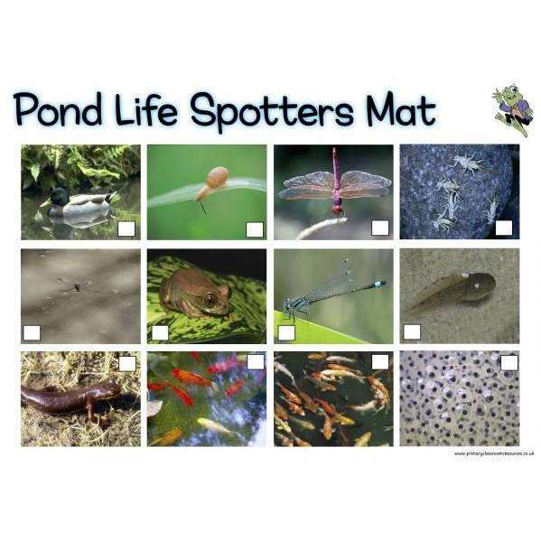 Pond Life Spotters Mat:Primary Classroom Resources