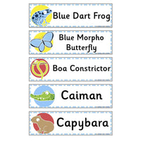 Rainforest Animals Flashcards