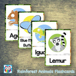 Rainforest Animals Large Flashcards:Primary Classroom Resources