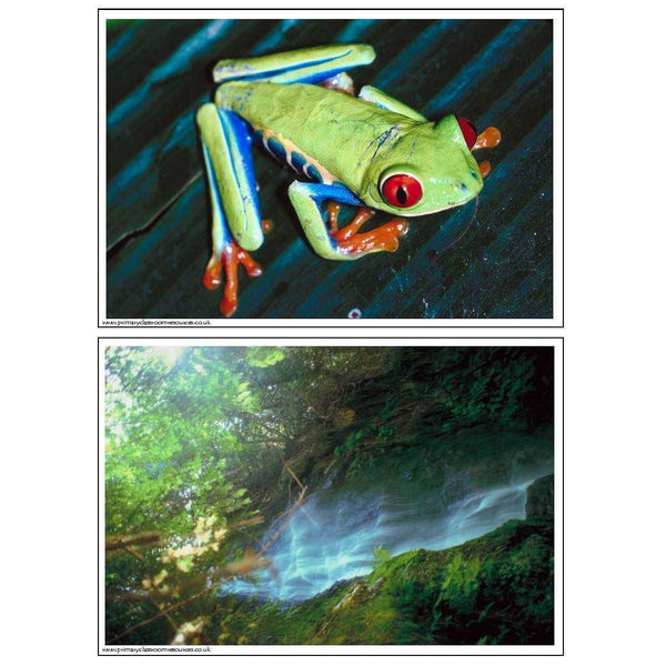 Rainforest Photo Pack:Primary Classroom Resources