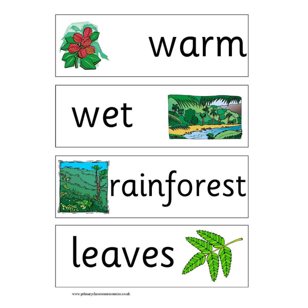 Rainforest Vocabulary Cards:Primary Classroom Resources