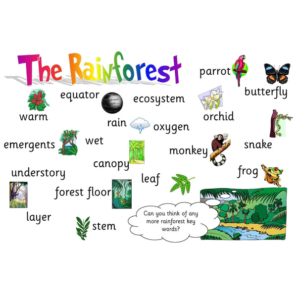 Rainforest Vocabulary Mat:Primary Classroom Resources