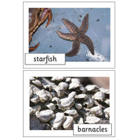 Seashore Life Photo Pack:Primary Classroom Resources