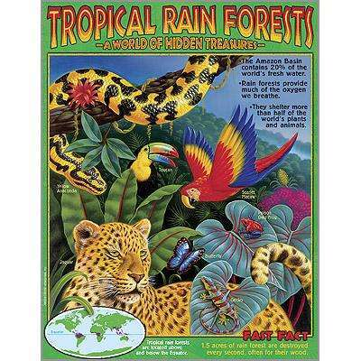 Tropical Rainforests Poster:Primary Classroom Resources