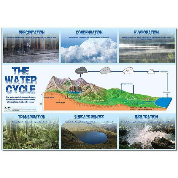 Water Cycle Poster:Primary Classroom Resources