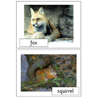 Woodland Creatures Photo Pack:Primary Classroom Resources