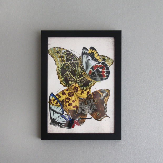 Butterfly Print/Variation 1