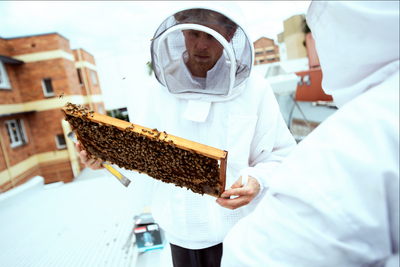 Course 2: Beginning in Bees, learn to keep bees in your backyard 2021