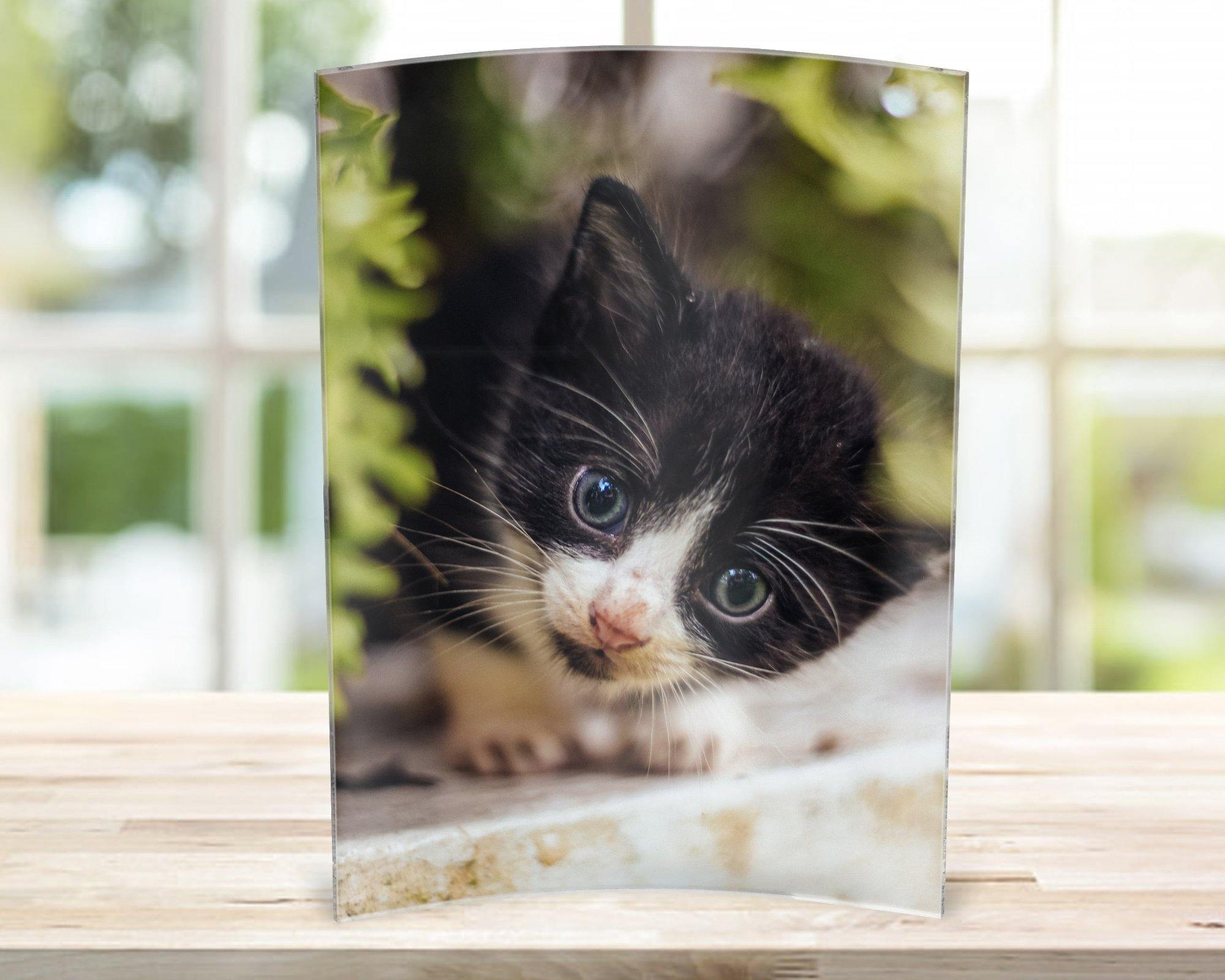 Custom Photo Gifts | Acrylic Photo Panels | Custom Pet Photo