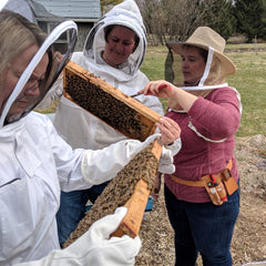 beekeeper shows tour guests a frame of bees