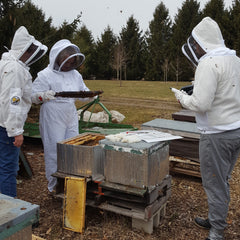 hive tour guests and beehive