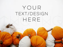 Load image into Gallery viewer, Velvet Pumpkins Styled Stock Photo