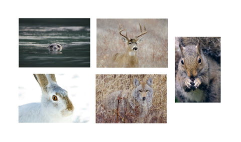 Note Card Set - Mammal Portraits