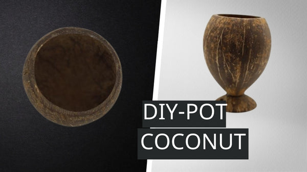 How To Make Coconut Pot At Home (Guide)