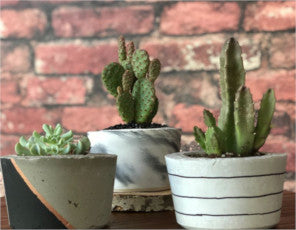 Tiny Little Cacti - Concrete Planters