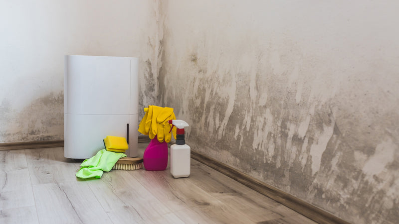 how a dehumidifier can help with mold