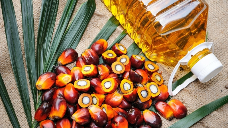 palm oil photo