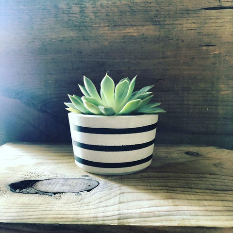 handmade striped concrete cacti planter made by tiny little cacti