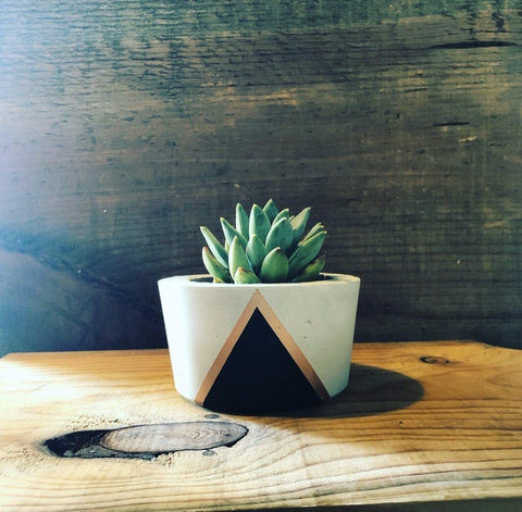 triangular designed concrete cacti planter