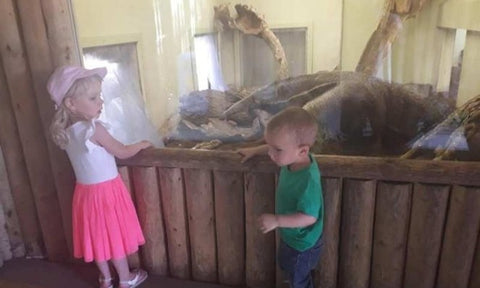kids playing at drusillas park zoo