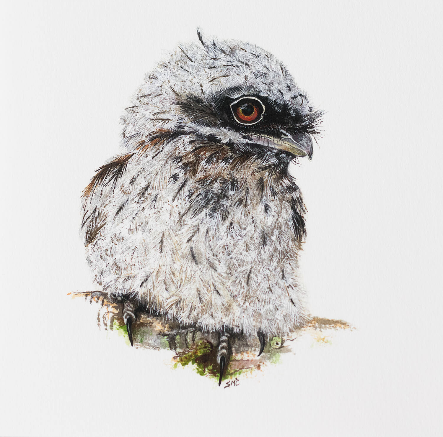 Tawny Frogmouth Tasmania Wildlife buy now fine art print