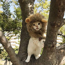 Load image into Gallery viewer, 1Pc  Pet Cat Dog Dress Up Costume Wig Emulation Lion Hair Mane Ears Head Cap Autumn Winter Muffler Scarf Pet Products